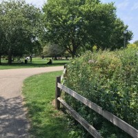 Winnemac Park